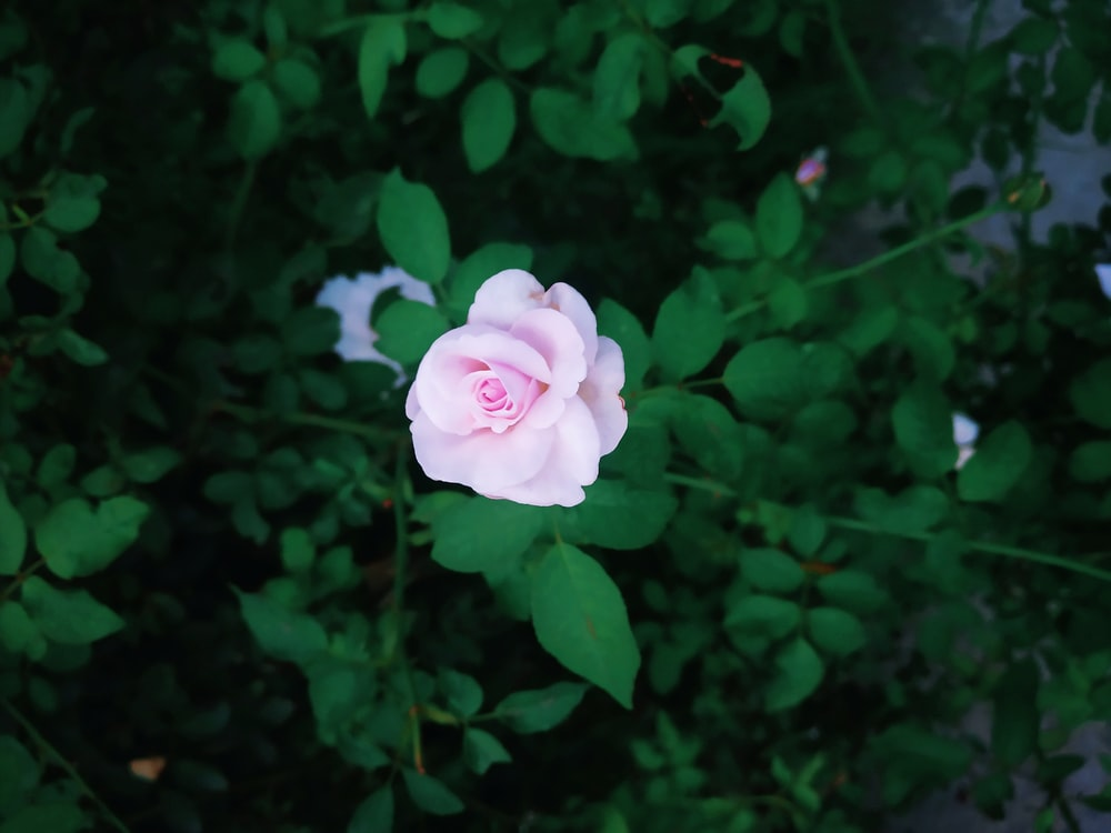 shallow focus photography green-leafed plant with pink flower