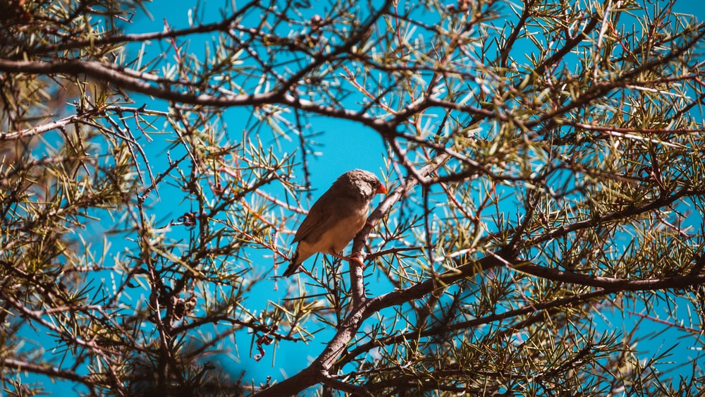 brown bird in a tree during daytime