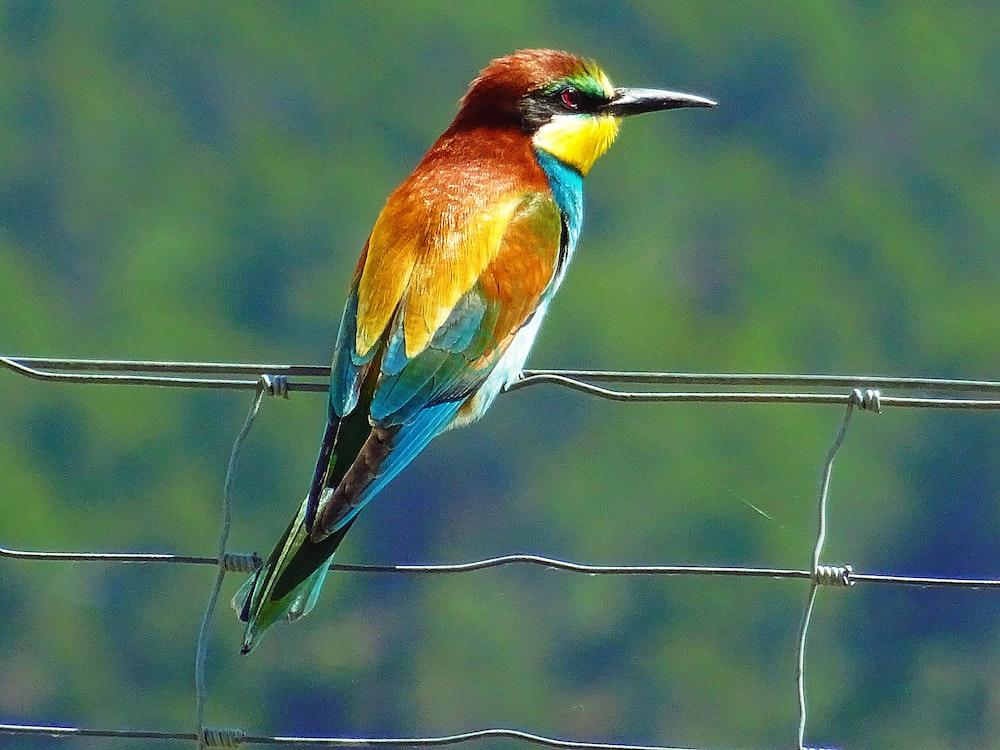 closeup photo of bird