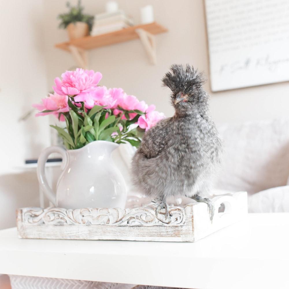gray bird