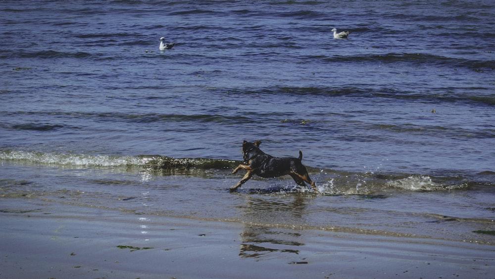 black dog running on seashore during daytime