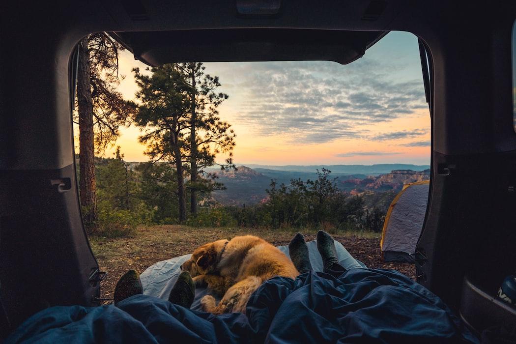 SUV bed platform with dog