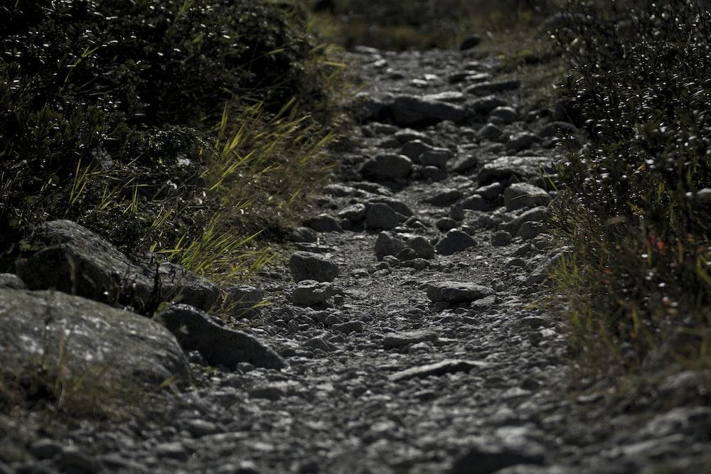 gray pathway between plants