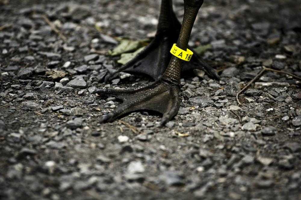 closeup photo of ducks feet