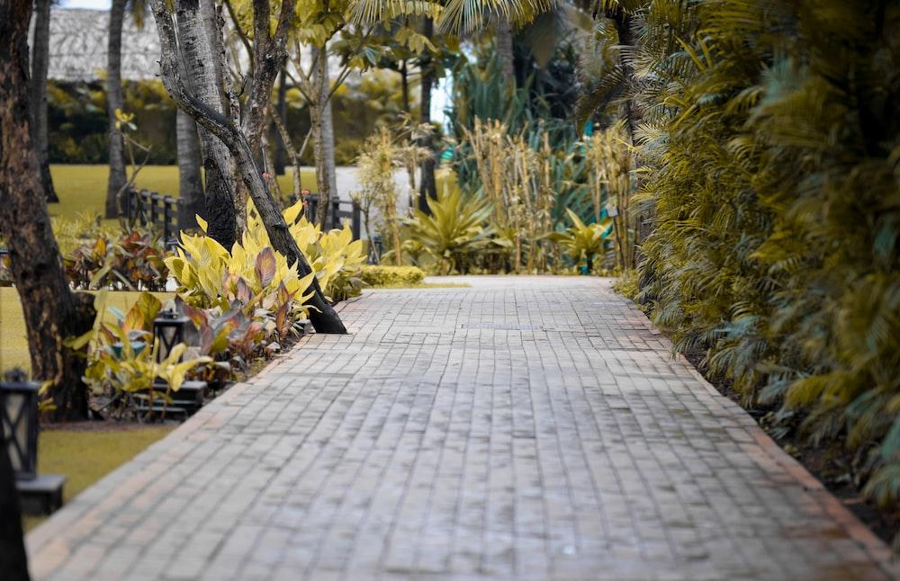 grey concrete pathway between trees