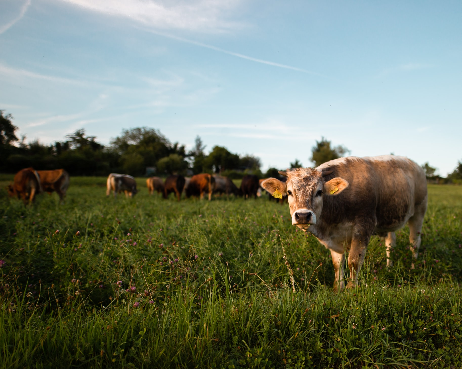 Actually Raising Beef Is Good for the Planet