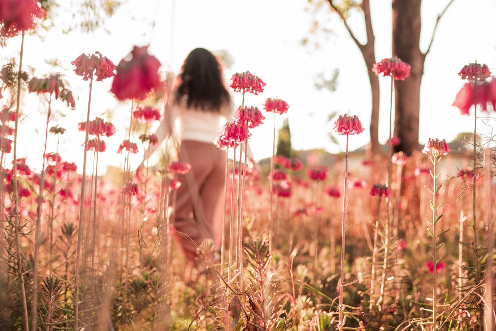 selective photo of red flower field during daytime
