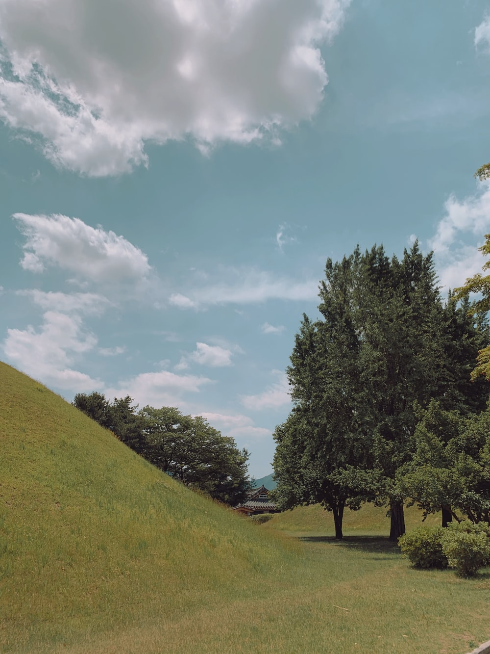 trees and green grass lawn during daytime