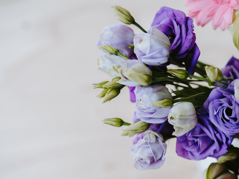 white and purple-petaled flower