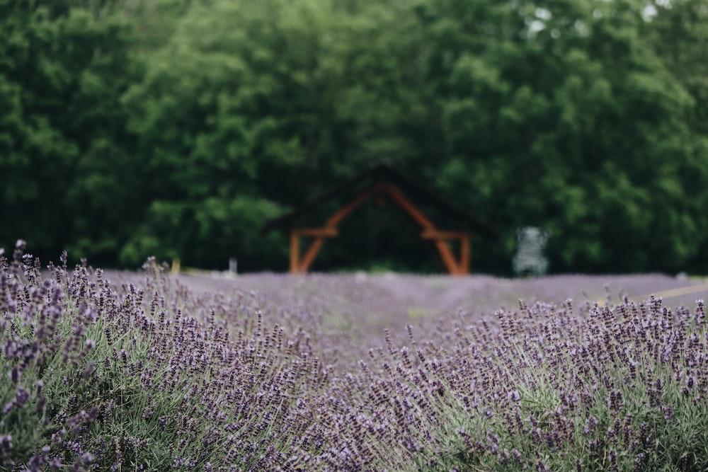 purple petaled flowers near trees