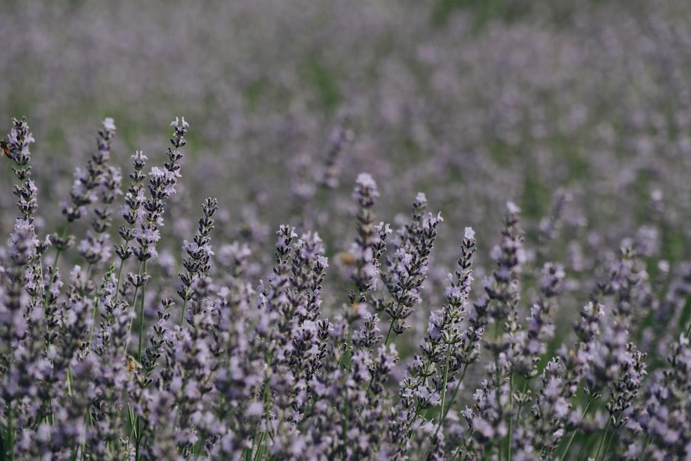 closeup photo of pink flower field
