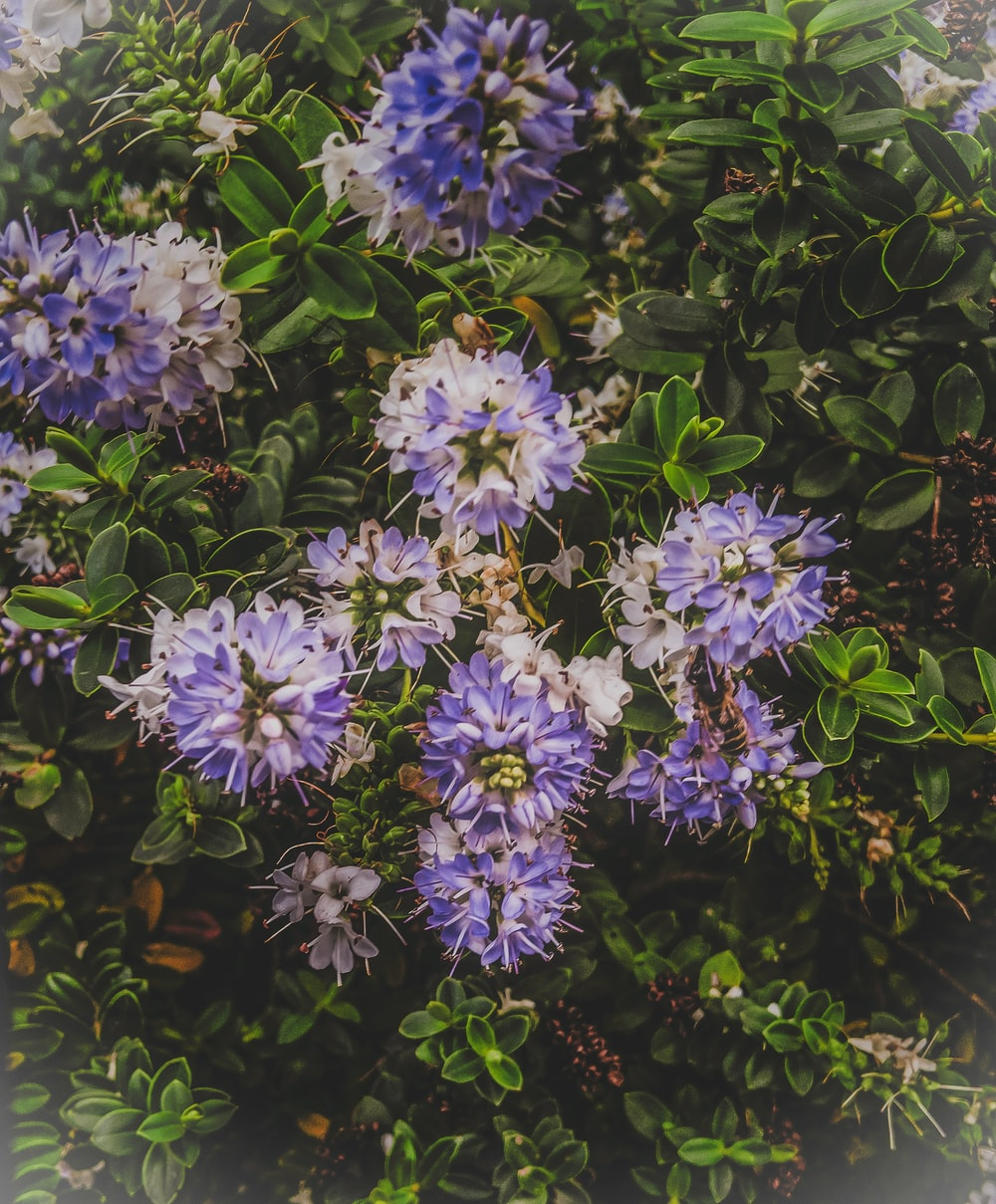 closeup photo of white and purple petaled flowers
