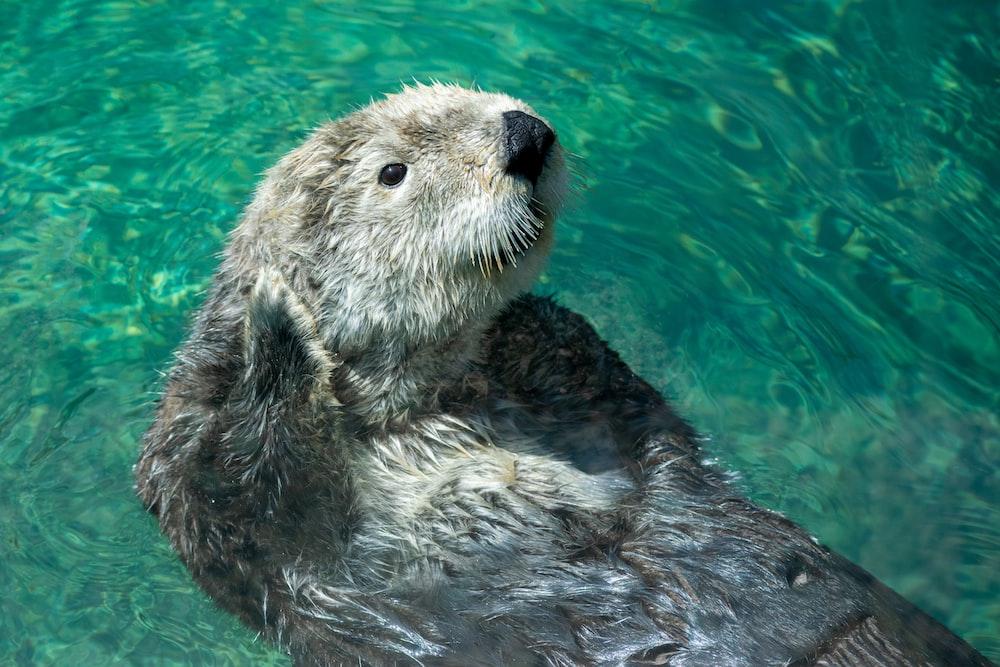 closeup photo of swimming rodent