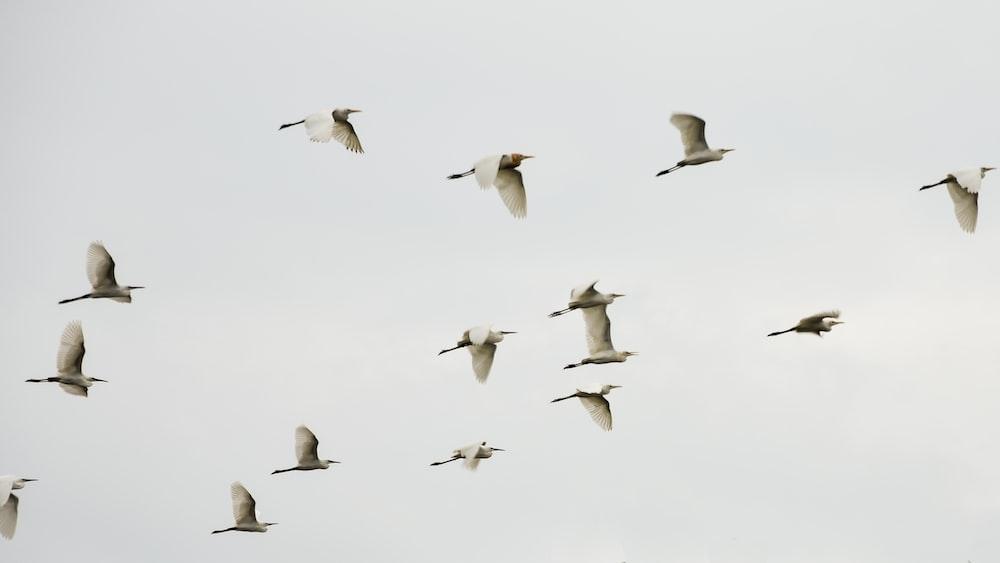 white birds flying on skies
