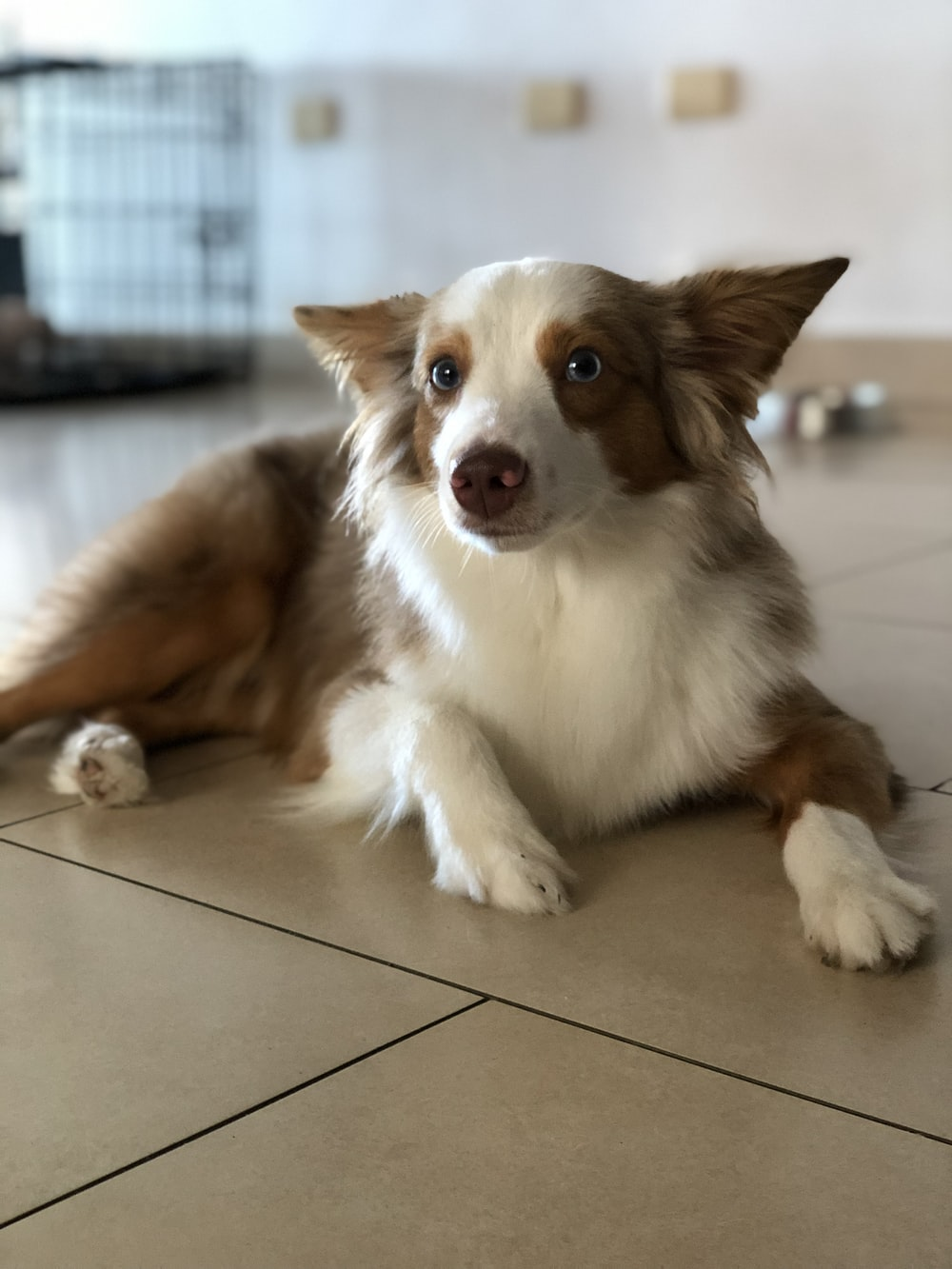 pet dog laying down on floor