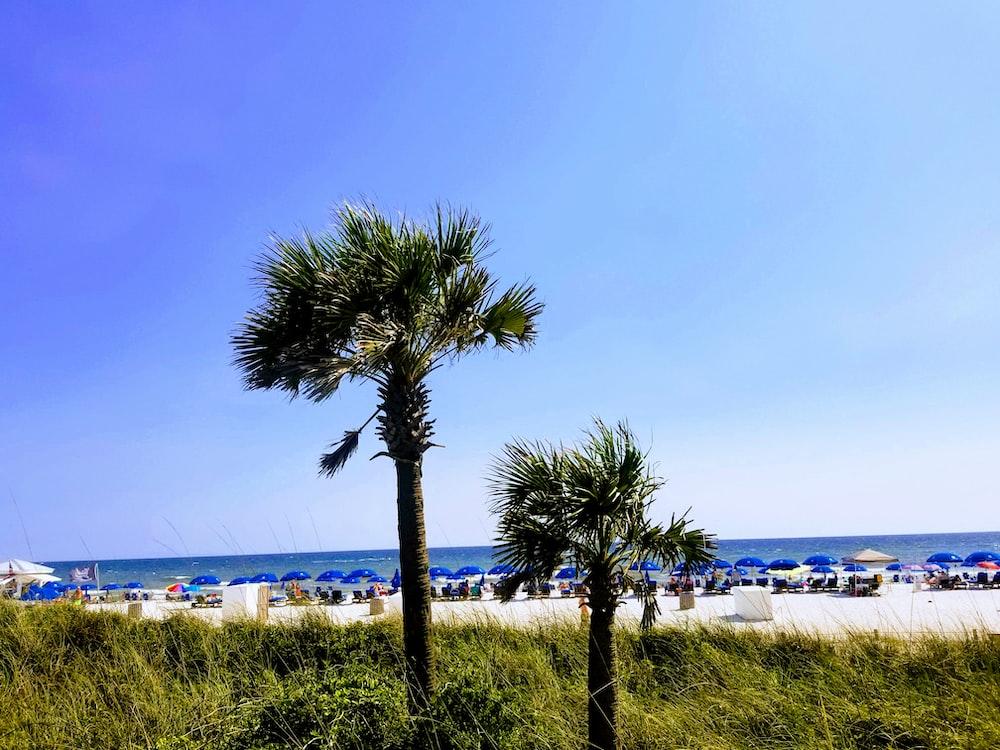 palm trees near beach at daytime