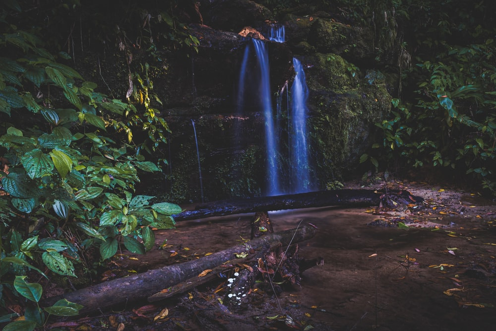 waterfalls and plants