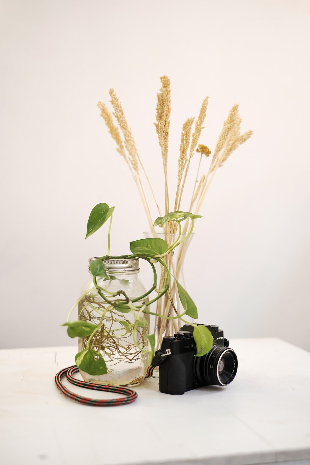 DSLR camera and plant on table