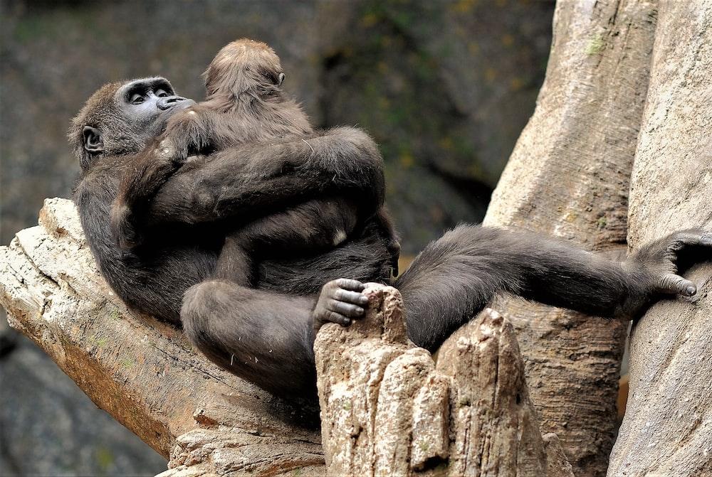 Wildlife, animal, mammal and monkey | HD photo by Elmarie