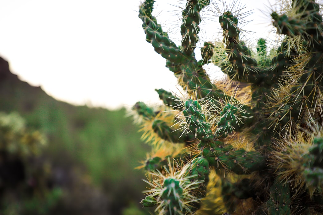Desert visit - one of the top things to do in Tucson