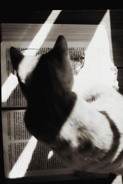 cat on top open book