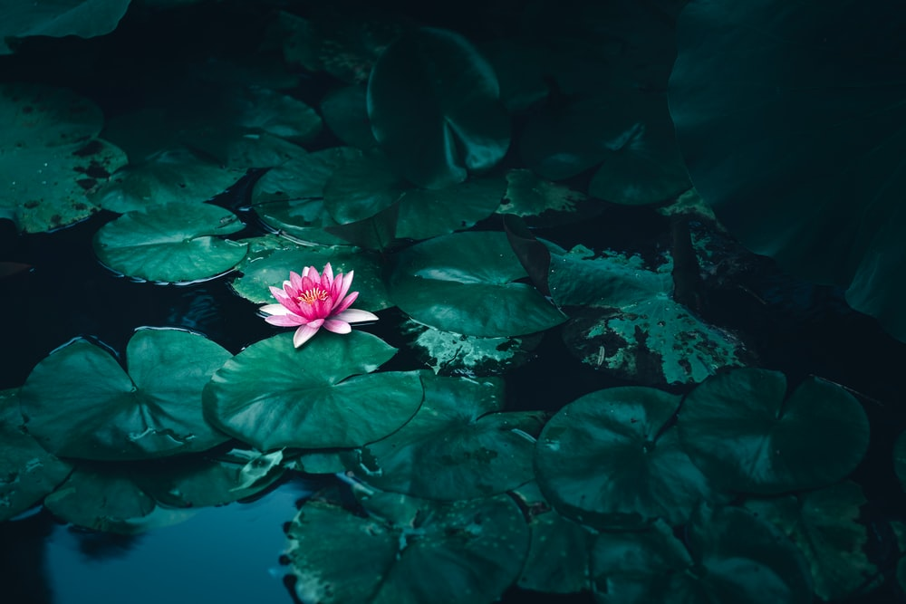closeup photo of flower on body of water