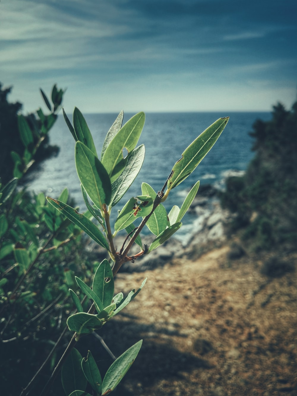 green leaf plant on shore