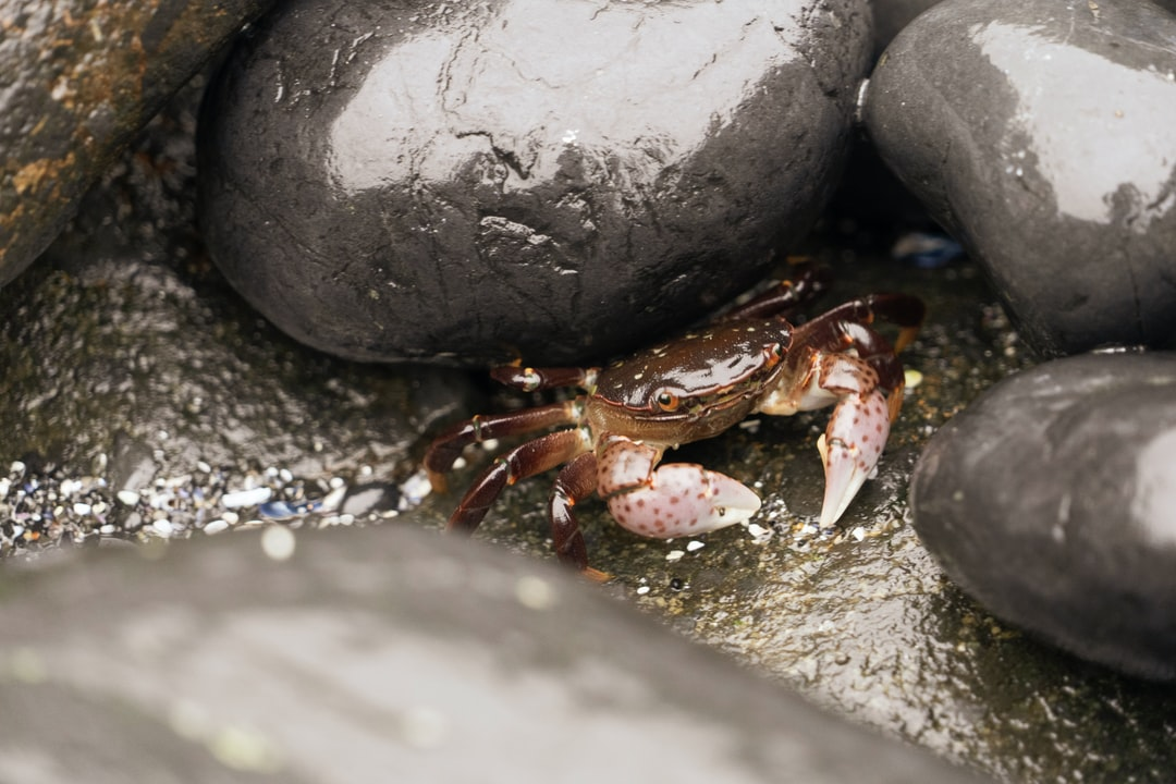 I almost stepped on this small crab at Cobble Beach in Newport, Oregon. It came out of hiding so I could take a photo of those polka dot claws. Very stylish crab. Not much else to say—sometimes you just gotta let nature be nature.