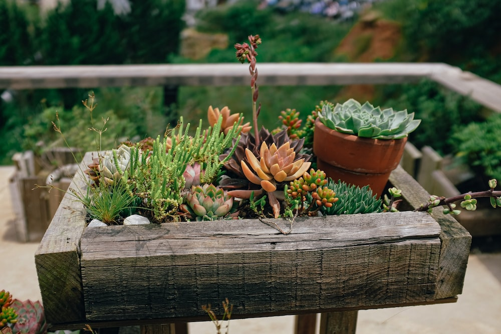 succulent plants on wooden tray