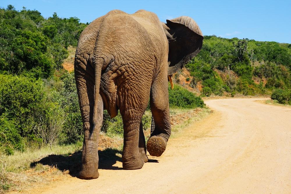 brown elephant walking besides green plants