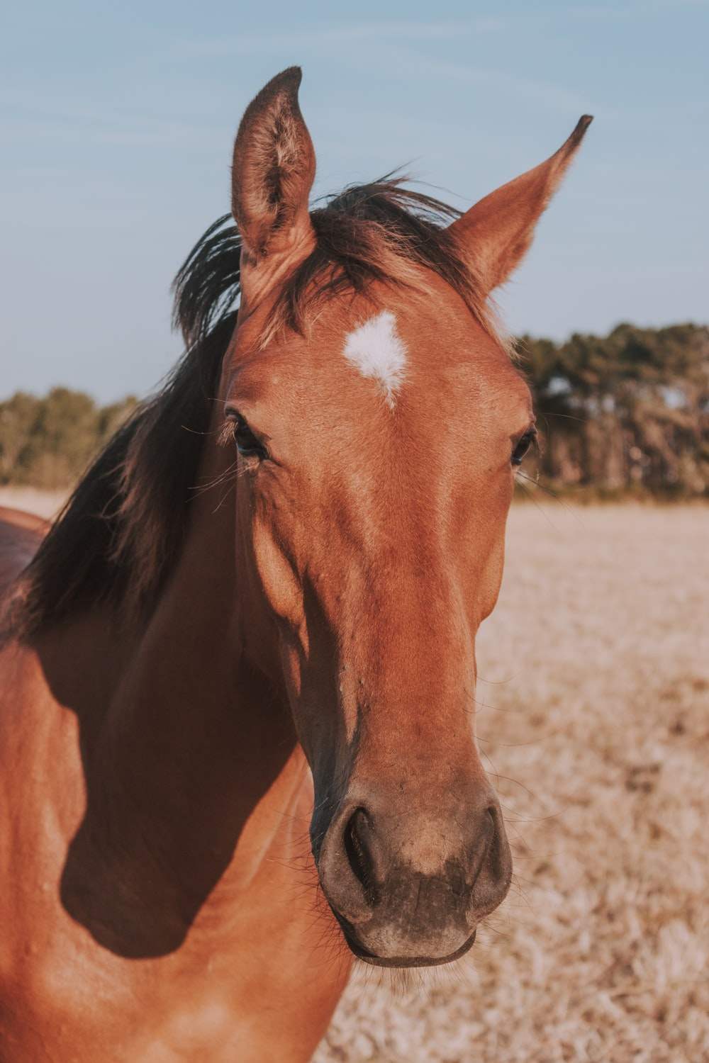 brown horse with white spot on forehead photo