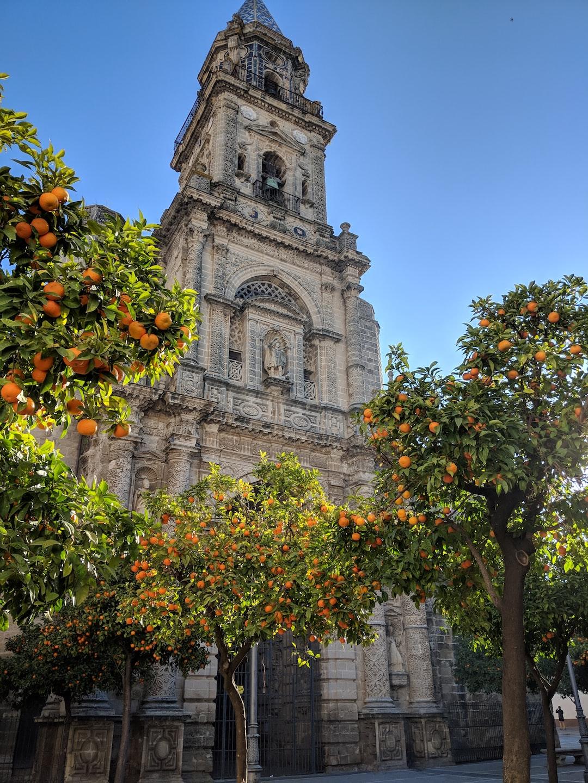 Church in Jerez de la Frontera with orange trees in a courtyard