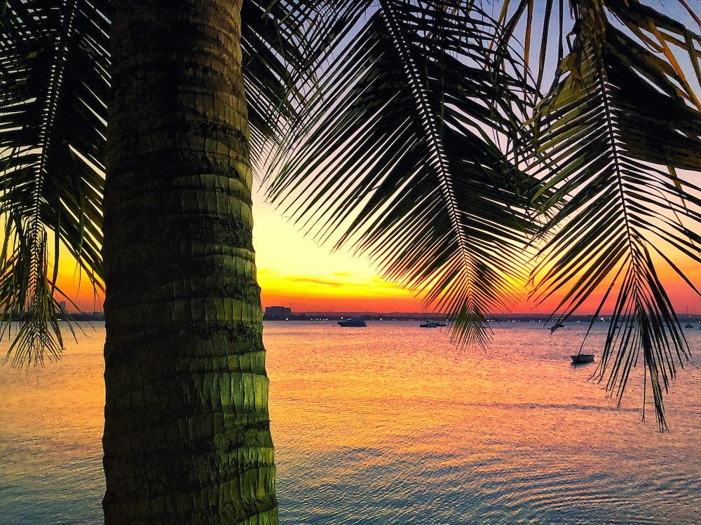 coconut tree near beside ocean during golden hour