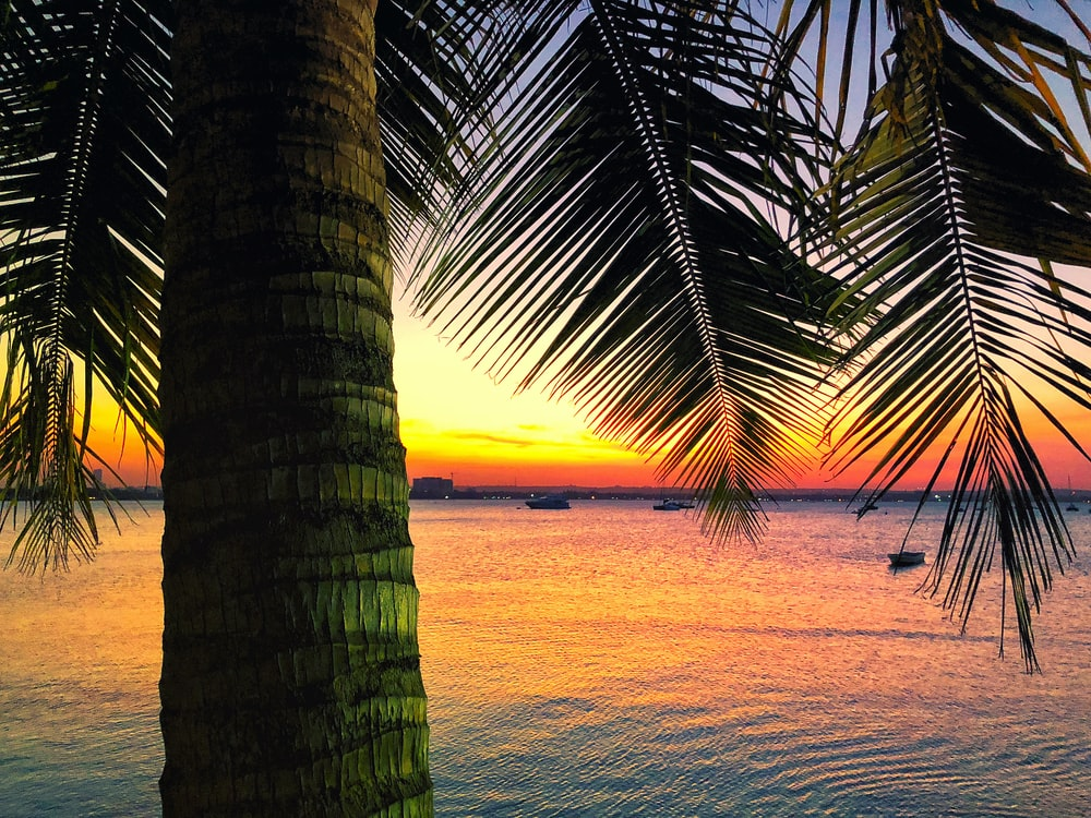 coconut tree near beside ocean during golden hour