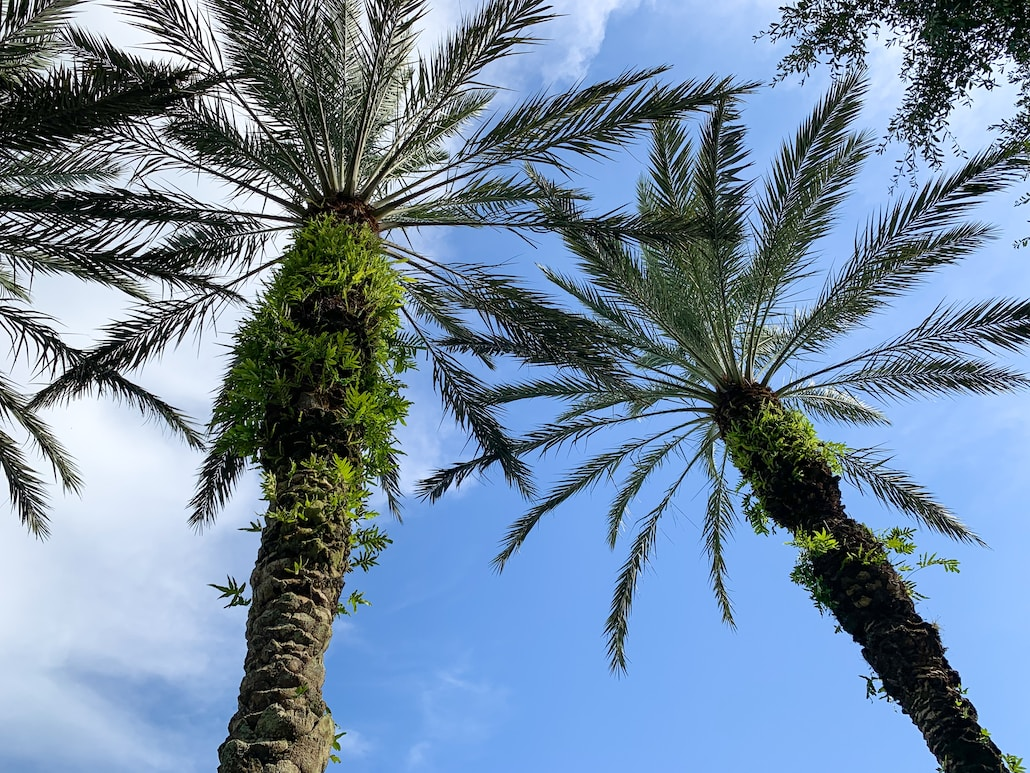 low angle photo of palm trees