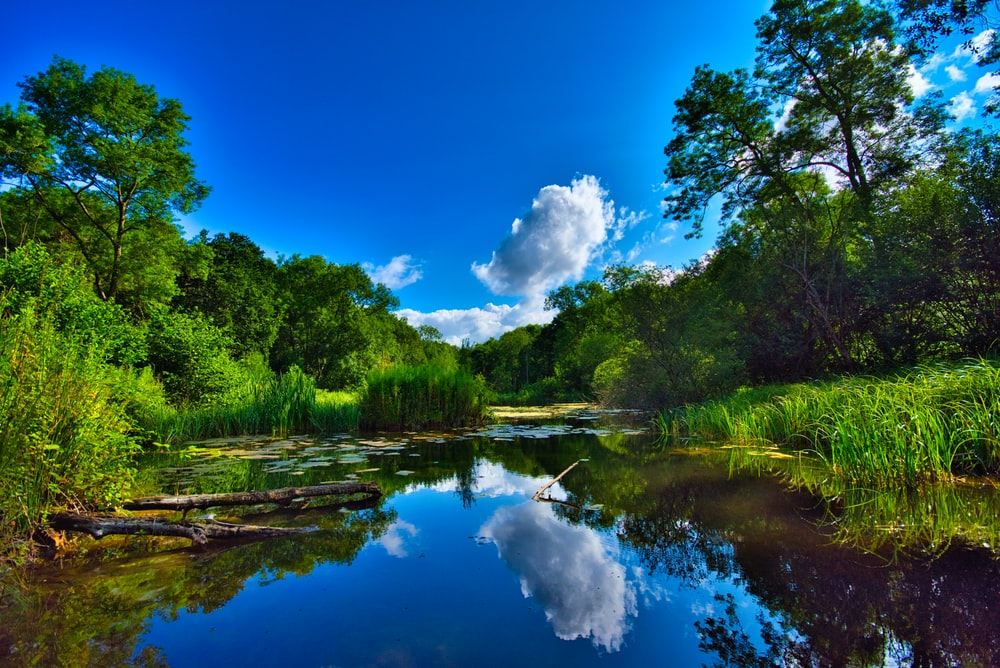 landscape photo of blue and brown lake between grass