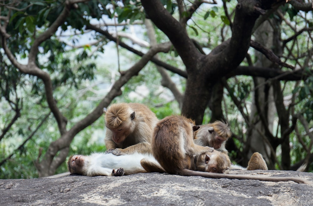 photography of group of monkey on ground