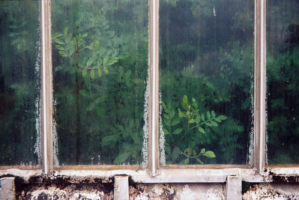 white glass-panel window across green plants