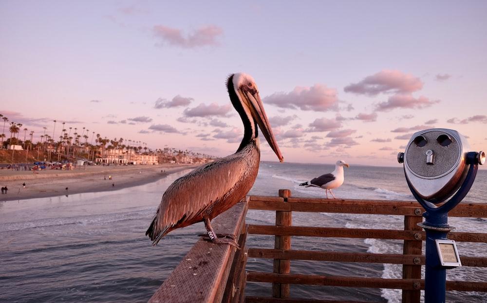 pelican standing on wooden rails