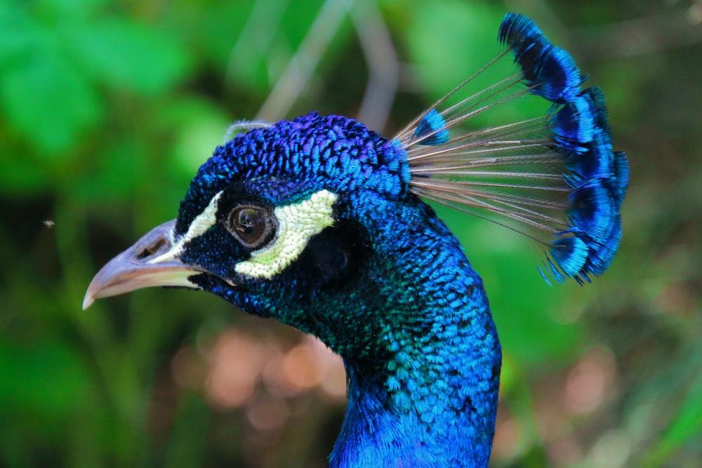 selective focus photography of blue bird