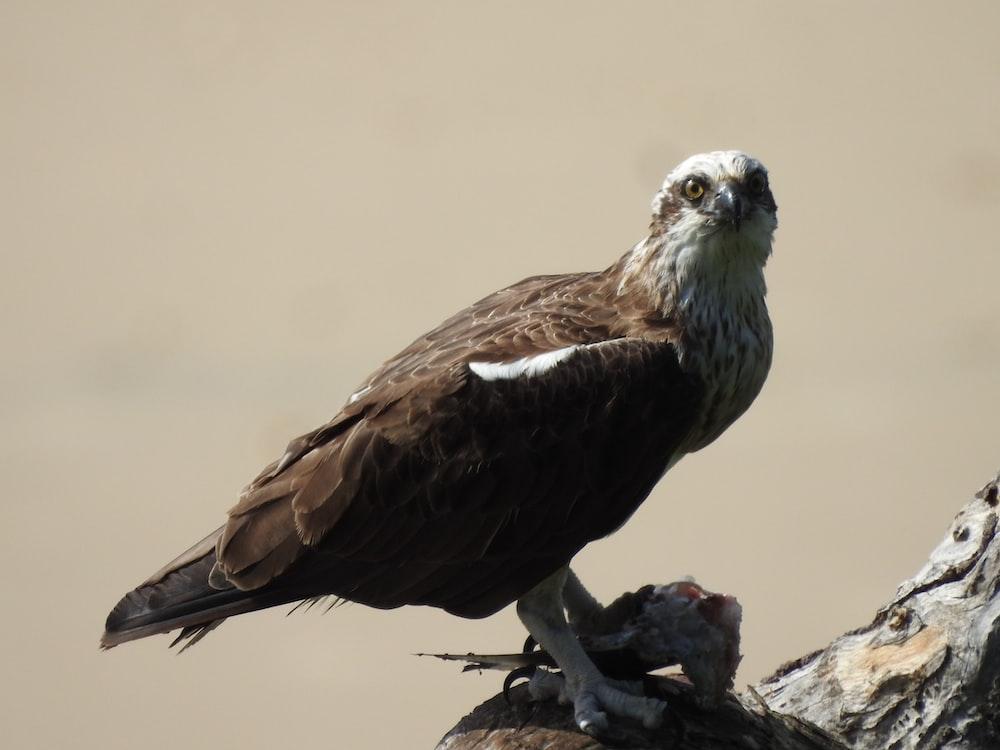 brown and grey bird