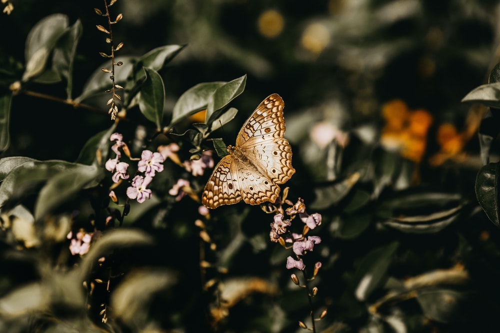 selective-focus photography of brown butterfly perching on plant