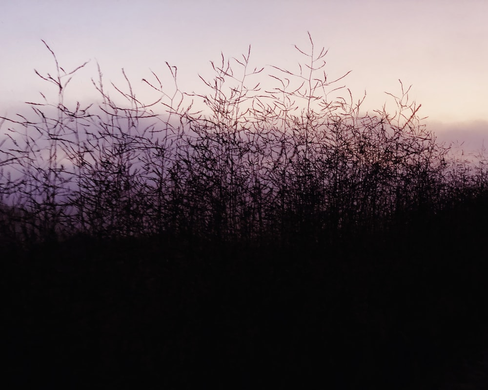 silhouette plant