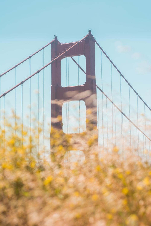 brown concrete bridge