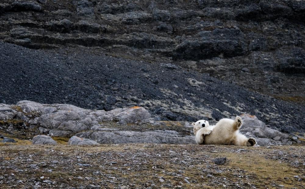 white bear lying on floor