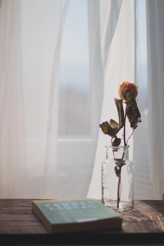 orange rose flower on clear glass jar \