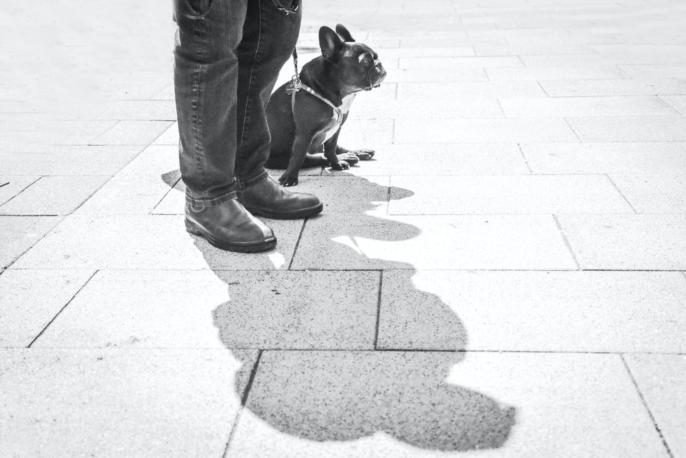 grayscale photography of person standing beside pug