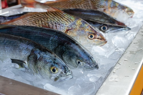鮮魚單人包