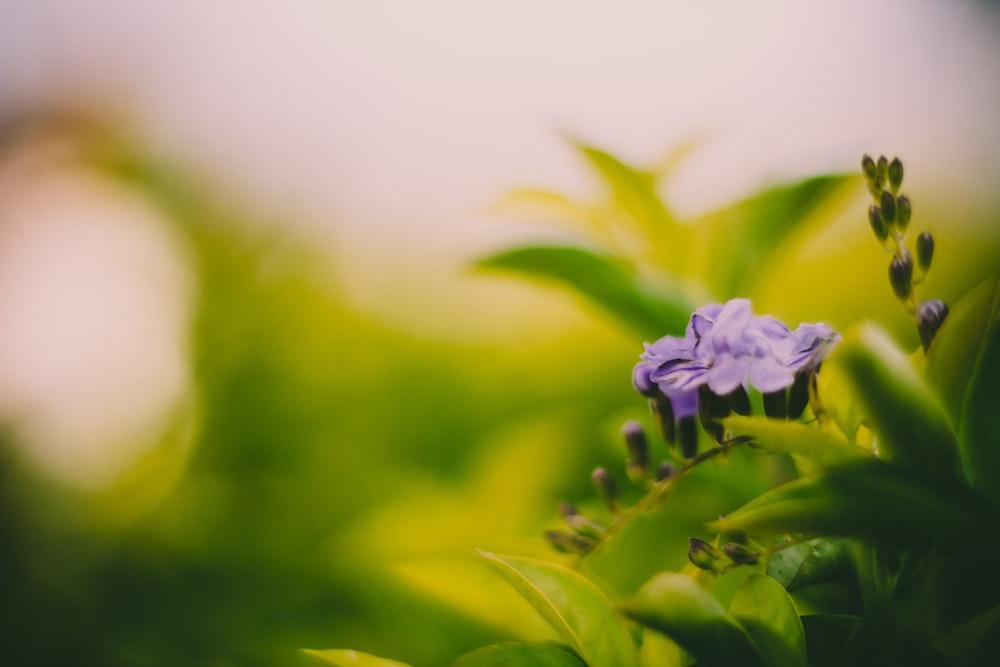 purple flower blooming