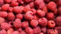 raspberry septolet stories